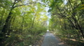 Walk in the autumn sunny forest. Forest road Footage