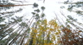 Autumn walk in the forest.  .Coniferous and deciduous trees 002 HD Footage