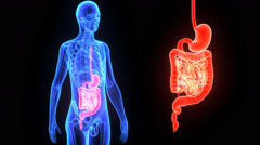Digestive system Stock Footage