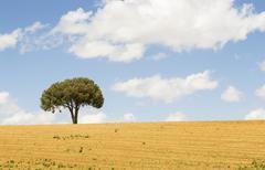 Solitary tree Stock Photos