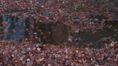 Leaves being blown toward side of stream Stock Footage
