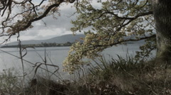Loch Lomond along the shore, sun, trees and water Stock Footage