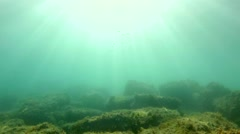 Underwater live at the bottom of the sea Stock Footage