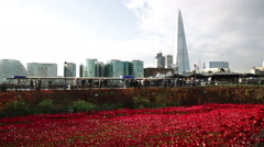 Tower of London poppies and the Shard Stock Footage