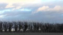 Time Lapse of hedgerow and rain clouds move past Stock Footage