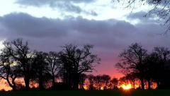 Time Lapse Sunset behind trees and rain clouds move past Stock Footage