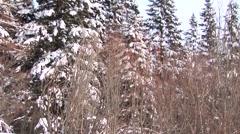 Winter Trees Stock Footage