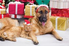 Two best friends dog and cat in christmas night Stock Photos