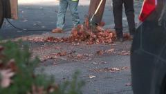 Road crew picking up leaves at curbside Stock Footage