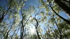 Tree leaves and branch in breeze, sun ray light and blue sky background. Stock Footage