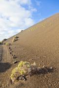 sparse vegetation on volcanic hills in timanfaya national park with route - stock photo