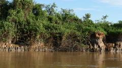 Boat ride riverbank Pantanal, slowmo Stock Footage