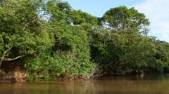 Stock Video Footage of Boat ride Pantanal wetlands, 4k
