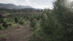 Christmas Tree Farm, Lot Stock Footage