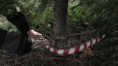 Close up of a Christmas Tree being Cut Down Stock Footage