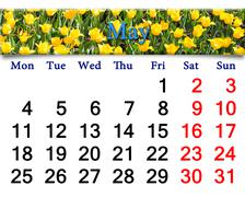 calendar for may of 2015 year with yellow tulips - stock illustration