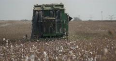 Cotton picking tele 4K Stock Footage
