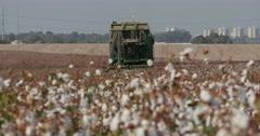 Cotton picking tele ls 4K Stock Footage
