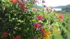 Wind flower garden and lake with mountain Stock Footage