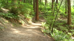Man jogs toward the camera on a forest path Stock Footage