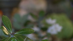 Close-up of green plants for interior decoration Stock Footage