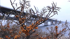 Tree berry The Bridge  Oresund Sea Bridge Stock Footage