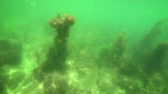 Close flyby of seagrass column underwater Stock Footage