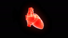Human Heart Stock Footage
