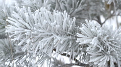 Fir tree is covered by ice in winter Stock Footage