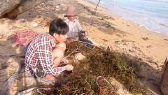 SEAWEED FARMERS - Youth Sorts Seaweed next to Woman Stock Footage