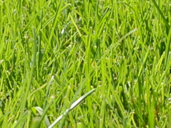 Background from a grass. Related clips are in my portfolio in 1920x1080. - stock footage
