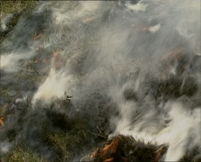 Ground fire, flames + smoke - full screen Stock Footage