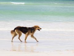 Running dog Kuvituskuvat