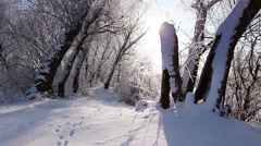 Falling snow in a winter park with snow covered trees, slow motion - stock footage