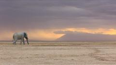 An elephant walking across majestic plain Stock Footage