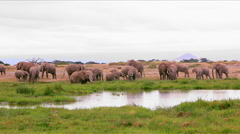 A herd of elephants at a watering hole Stock Footage