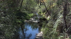 4K Serene Woodland Stream Reflection Stock Footage