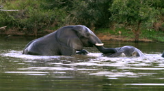 Two elephants in water Stock Footage