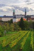 Vineyard and cathedral in bamberg Stock Photos