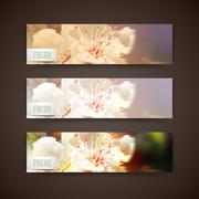 Set of banners with blurred background of blossom cherry flowers, vector design Stock Illustration