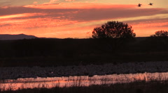 Sunrise at Bosque Del Apache NWR Stock Footage