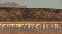 Sunrise at Bosque Del Apache NWR Stock Footage