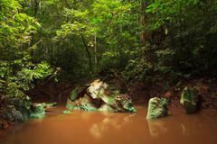 Small jungle river in borneo Stock Photos
