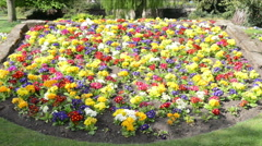 Colourful flower bed Stock Footage