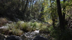 4K Swift Stream Cuts Through Forest Stock Footage