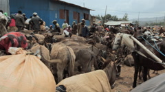 Donkeys and people at a local market Stock Footage