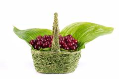 cherry basket - stock photo