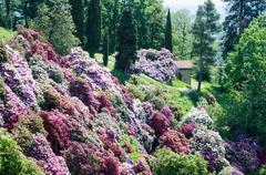 Azalea garden in italy Stock Photos