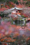 temple in kyoto - stock photo