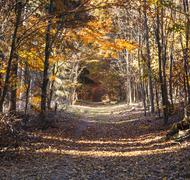 Beautiful forest in indian summer light in autumn Stock Photos